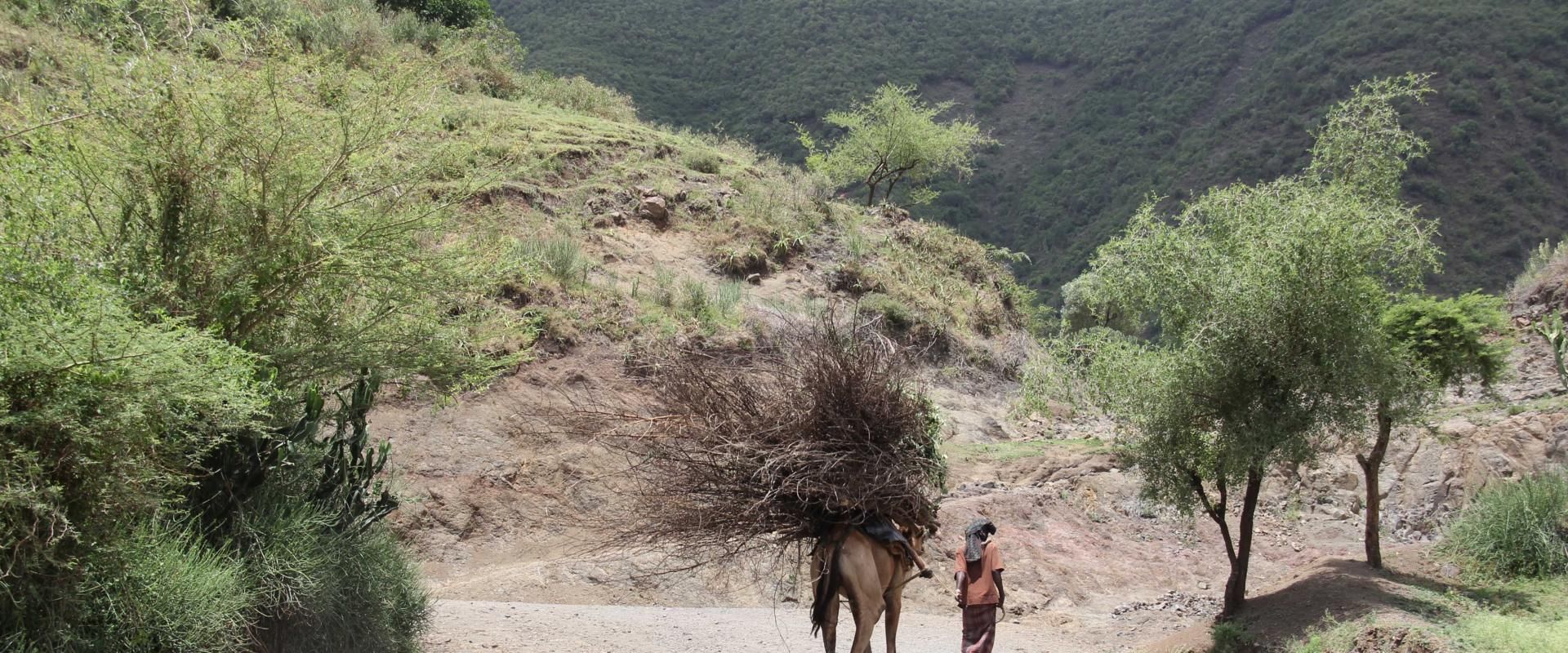 Fighting Climate Change: IOM helps Ethiopian farmers adapt to drought and flooding
